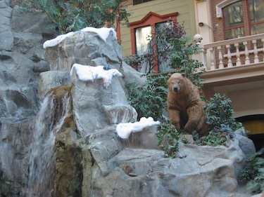Bear at the top of a waterfall