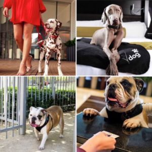 Four pictures of dogs at Vdara Las Vegas
