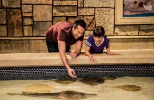 Father and daughter feeding stingrays at the Shark Reef Aquarium at Mandalay Bay Las Vegas